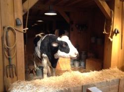 The_talking_cow.JPG